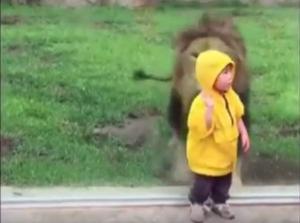 Oroszlán és kisgyerek